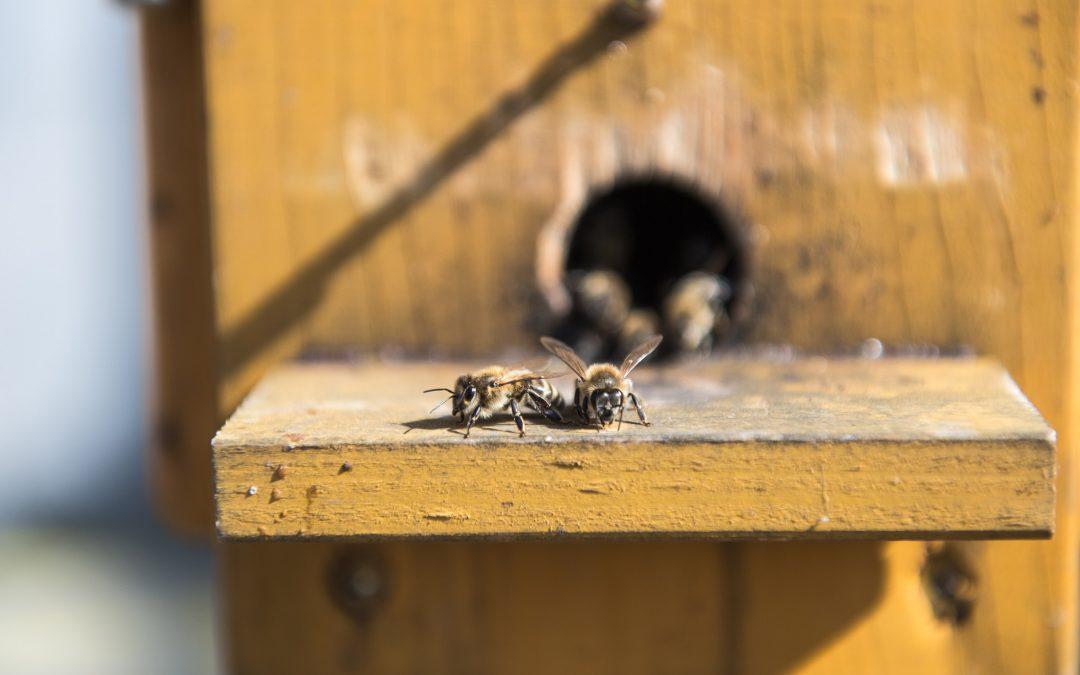 Bienen Imker Bremen regional leben