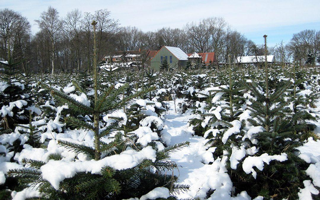 Orthof-Dehlwes-Weihnachtsbaum-Lilienthal
