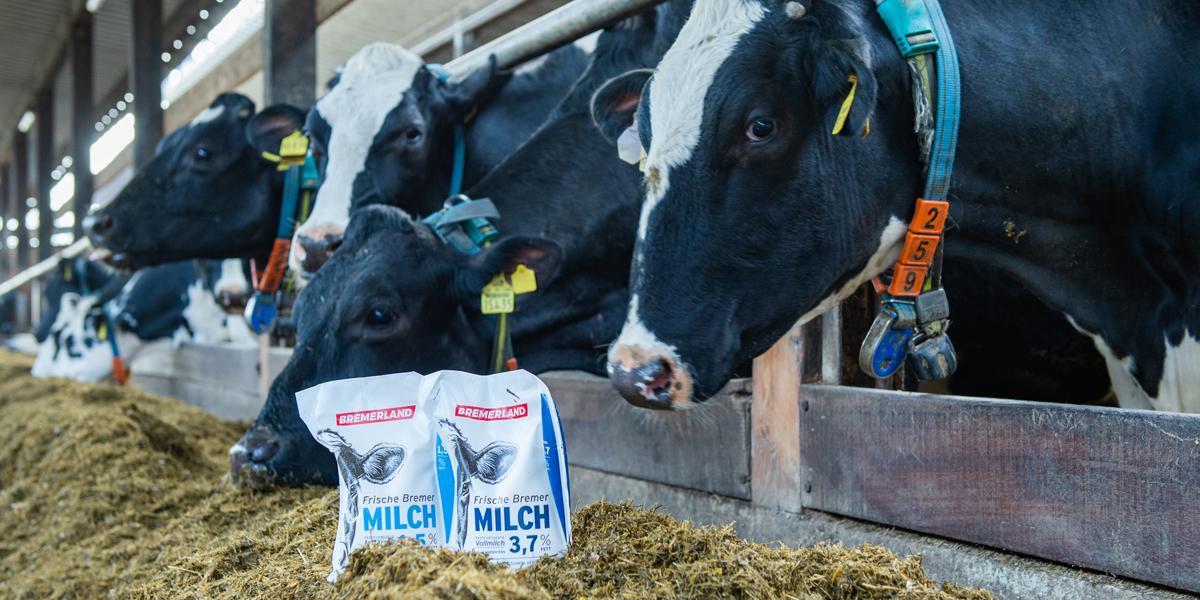 bremerland milchvieh landwirtschaft bremen